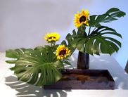 Ceramics Vases, Sunflowers, Philodendron. 28´´x48´´x32´´. 2006. Free Style.